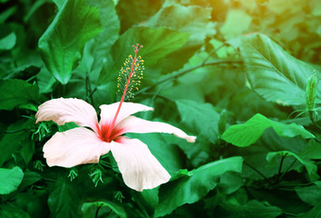 Fototapete - Beautiful tropical scene with exotical flower