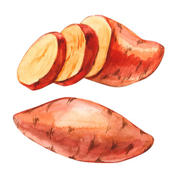 Watercolor whole and cuted slice sweet potato set hand drawn illustration isolated on white background