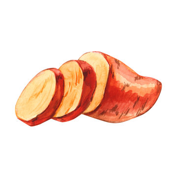 Watercolor cuted slice sweet potato hand drawn illustration isolated on white background
