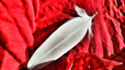 Close-up Of Feather On Red Plant Fototapete