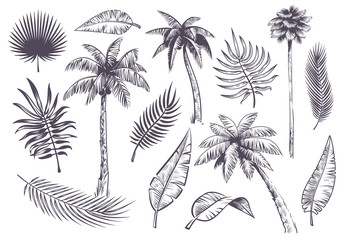Sketch palm trees and leaves. Hand drawn tropical palms and leaf, black line silhouette exotic plants hawaii natura, engraving vector set