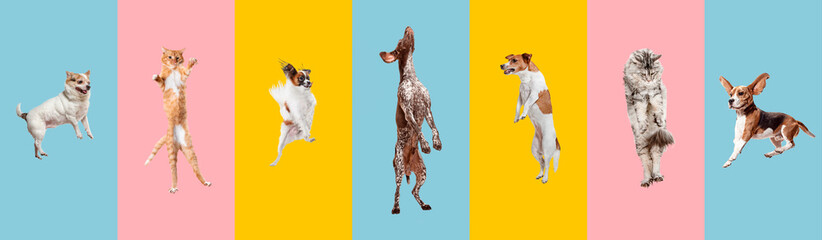 Young dogs jumping, playing, flying. Cute doggies or pets are looking happy isolated on colorful or gradient background. Studio. Creative collage of different breeds of dogs. Flyer for your ad. Papier Peint