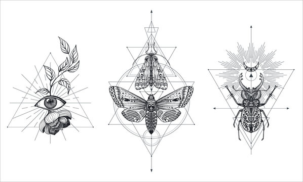 Collection of black and white moths and beetle over sacred geometry sign, isolated vector illustration.