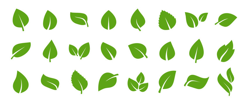Set of green leaf icons. Green color. Leafs green color icon logo. Leaves on white background. Ecology. Vector illustration.