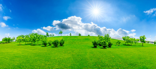 Green grass and tree on a sunny day.