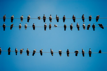 Pigeons on a telephone wires, Pushkar, India Fotobehang