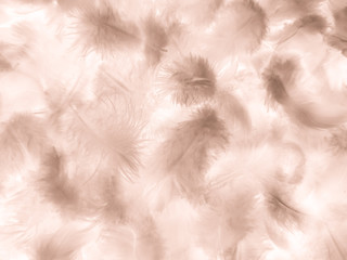 Beautiful abstract white and brown feathers on white background and soft yellow feather texture on white pattern and yellow background, feather background, gold feathers banners Fototapete