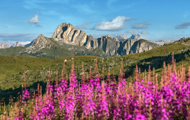 Fotomurales - Flowers field on the background of alpine mountain peaks in the Dolomites Alps. Beautiful natural landscape. Amazing nature scenery