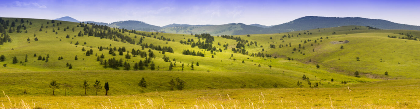 Panorama of mountain landscape. Summer in western Serbia. Great plains and mountains in background. Pine trees and meadows.