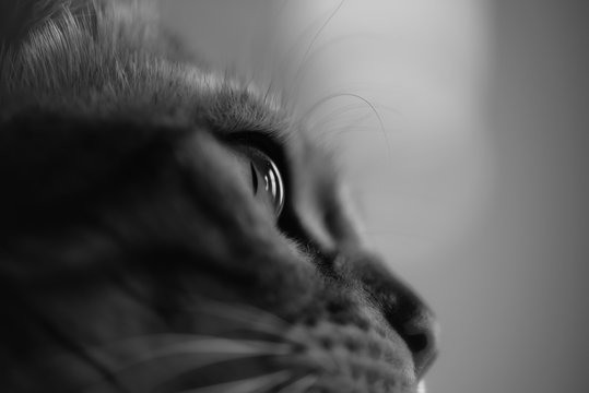 Cropped Image Of Cat Looking Away