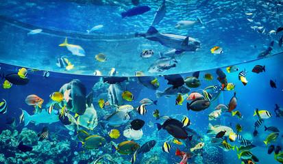 Poster Submarine aquarium, okinawa churaumi, okinawa aquarium, large aquarium, largest aquarium, tropical fish, aquatic fish, deep blue