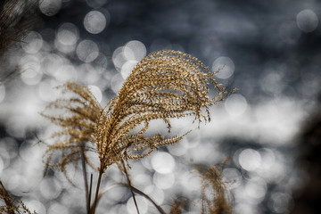 Close-up Of Grass Against Blurred Background