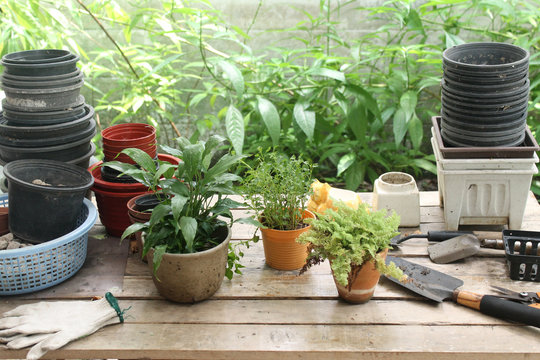 gardening equipment and potted plant on wooden table