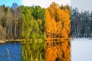Fototapeta cztery pory roku na jednym zdjęciu, widok na staw w czterech porach roku, wiosna, lato, jesień, zima obraz