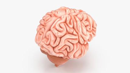 Fototapeta 3d render of human brain isolated on white background, brain human anatomy, 3d rendering