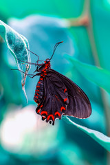 Foto auf AluDibond Schmetterling Beautiful heliconius butterfly sitting on flower in a summer garden