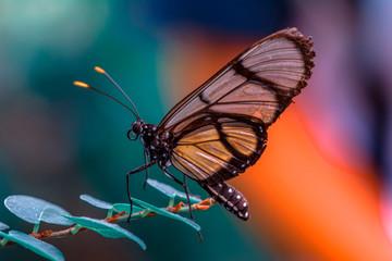 Foto auf AluDibond Schmetterling Closeup beautiful butterfly in a summer garden