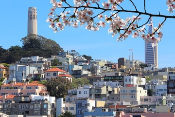 Canvas Prints San Francisco San Francisco city skyline. Spring time cherry blossoms.