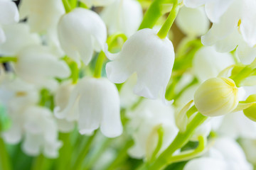 Wall Murals Lily of the valley Lily of the valley close-up, detailed bright macro photo. Soft focus. The concept of spring, may, summer. Floral background..