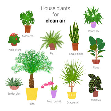 Colorful set of various potted houseplants for clean air. Succulents, evergreen plants in planters. Flat style stock vector illustration