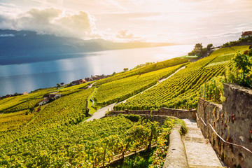 Lavaux, Switzerland: Lake Geneva and the Swiss Alps landscape seen from Lavaux vineyard hiking trail in Canton Vaud