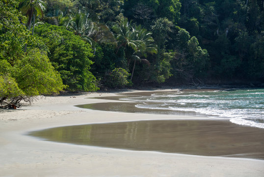 Costa Rica, Central America: Sandy beach with tropical trees in Manuel Antonio National Park
