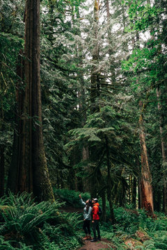 Couple looking at trees in forest
