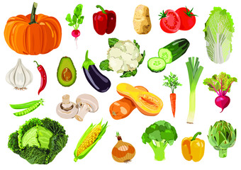 Vector collection of  24 fresh vegetables.