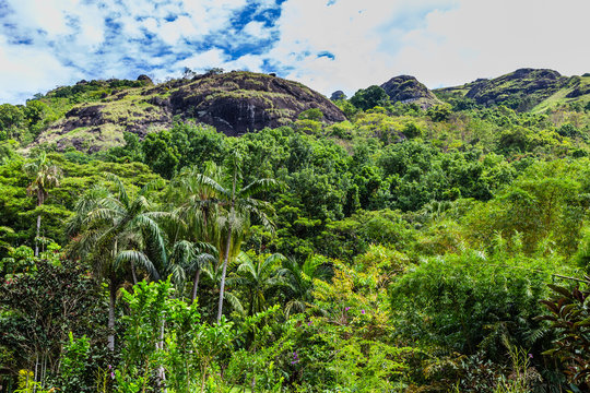 Rocky hills covered in vegetation in the Fijian countryside.