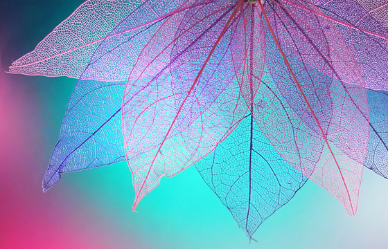 Texture transparent skeleton leaves turquoise pink color. Bright expressive colorful beautiful artistic image of nature.