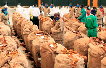 Workers stand amongst bales at the start of the tobacco selling season, after the coronavirus disease(COVID-19) outbreak delayed the opening of auctions by more than a month, in Harare