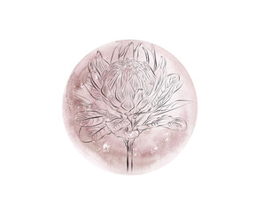 Watercolor pink moon phase with fine art protea isolated on white background. Watercolor hand drawn earth satellite moon. Magic abstract illustration. Pink floral planet ball