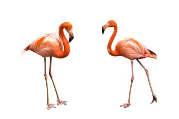 Printed roller blinds Flamingo Flamingos isolated on white background