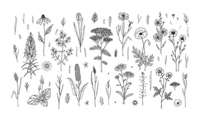 Fototapeta Set of hand drawn meadow flowers and herbs isolated on white. Vector illustration in sketch style