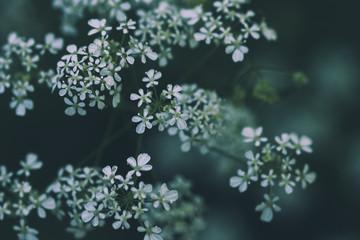 Foto auf Gartenposter Blumen Gros plan de fleurs sauvages