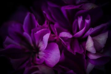 Spoed Fotobehang Bloemen Pétales roses en gros plan