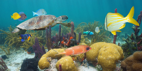 Caribbean sea colorful coral reef underwater with a green sea turtle and tropical fish, Mexico