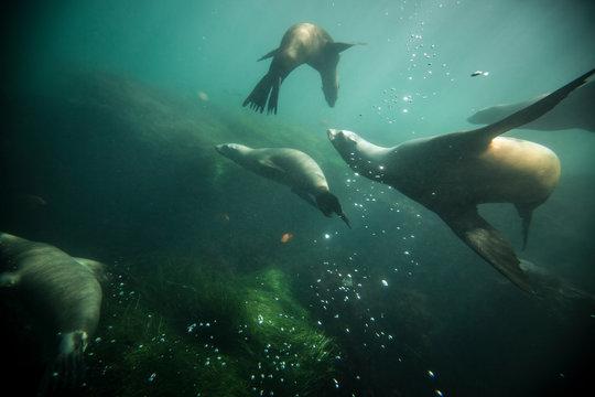 La Jolla Cove em San Diego - California. A praia das focas e leões marinhos