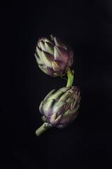 Fresh raw artichokes on black background. Ripe organic artichoke flower with copy space.