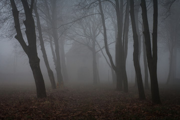 Spoed Fotobehang Grijs mgła w parku