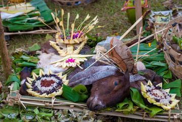 Goat's head offerings for the gods in Bali