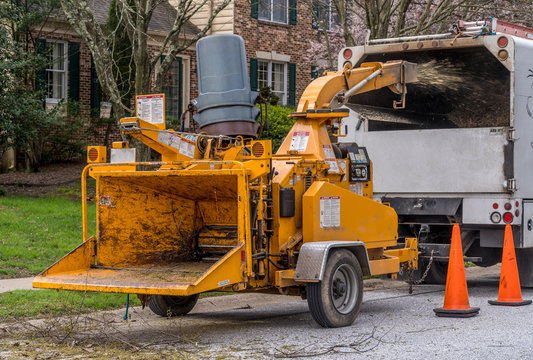 Yellow commercial wood chopper shredding a piece of freshly removed cut wood and blowing it into a white truck to haul it away