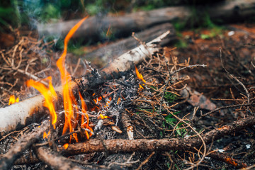 Keuken foto achterwand Brandhout textuur Burning branches and brushwood in fire close-up. Atmospheric warm background with orange flame of campfire and blue smoke. Beautiful full frame image of bonfire. Firewood burns in vivid flames.