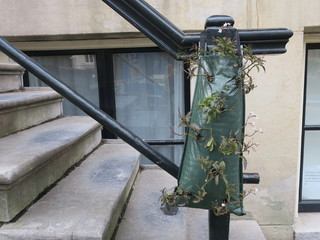 plants growing in a green plastic bag hanging on the handrail