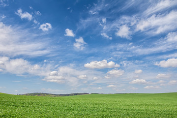 Foto auf AluDibond Rosa dunkel Green spring field under beautiful blue sky with clouds