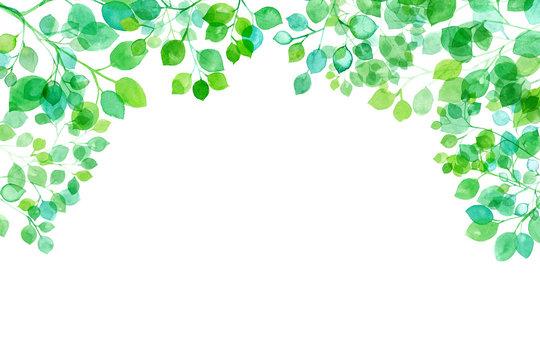 新緑、太陽光に透過し輝く枝葉の水彩イラスト、フレーム背景