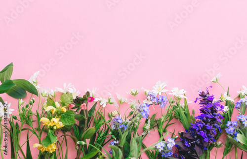 Floral flat lay of colorful spring wildflowers on pink paper background, space for text. Floral greeting card template. Happy Mother's day concept. Hello spring. Blooming spring flowers border
