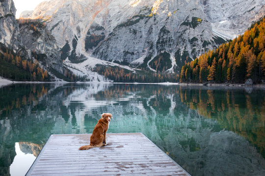 dog stand on a wooden pier. Mountain Lake Braies. boat station. landscape with a pet