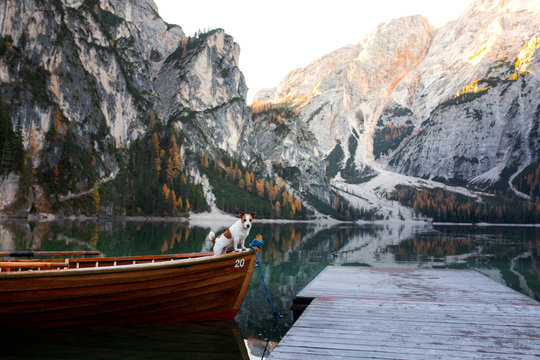 dog Jack Russell Terrier in a boat. Mountain Lake Braies. boat station. landscape with a pet