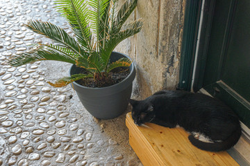 Black cat spends time siesta near the house, on a bench under a green flower